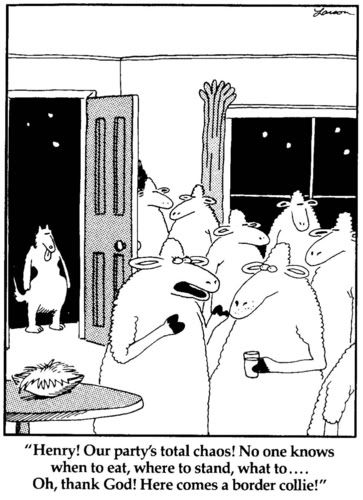 the far side comics cats - Google Search.        Our border collie, Panda would try to herd our cat.