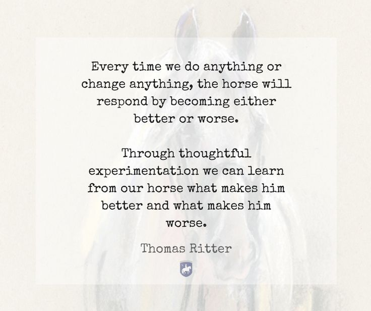 """""""Every time we do anything or change anything, the horse will respond by becoming either better or worse. Through thoughtful experimentation we can learn from our horse what makes him better and what makes him worse."""" - Thomas Ritter"""