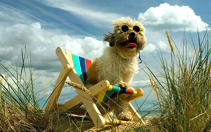 A holiday guide for dog lovers, including advice on the UK's best dog-friendly hotels, b & bs, self-catering accommodation and campsites, plus a word of warning on the pitfalls on travelling with a pet