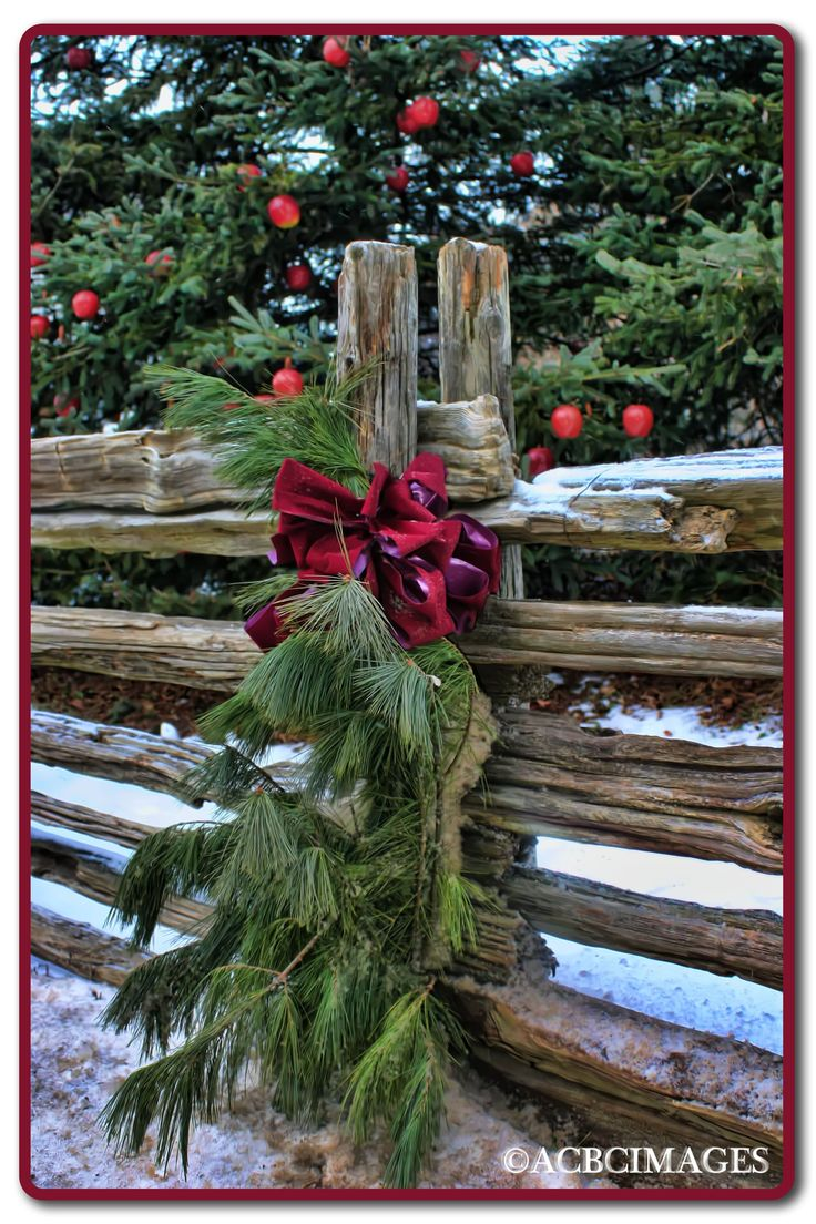 Evergreen Swags decorating the fence along the lane that leads to your Barn Wedding Venue...