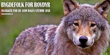 click on image and sign the petition :) thanks Prime minister, Erna Solberg and the Secretariat of the Bern Convention: Stop Norway's plan to slaughter our wolves/Stopp utryddelsen av våre ulver.  12,928 signers. Let's reach 15,000 Why this is important............