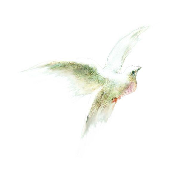 окно в мое сердце ❤ liked on Polyvore featuring birds, animals, fillers, decoration and nature