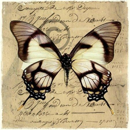 To sommerfugl-bilder. BUTTERFLIES BY INGER BENTE MOLVIK, NORWAY.