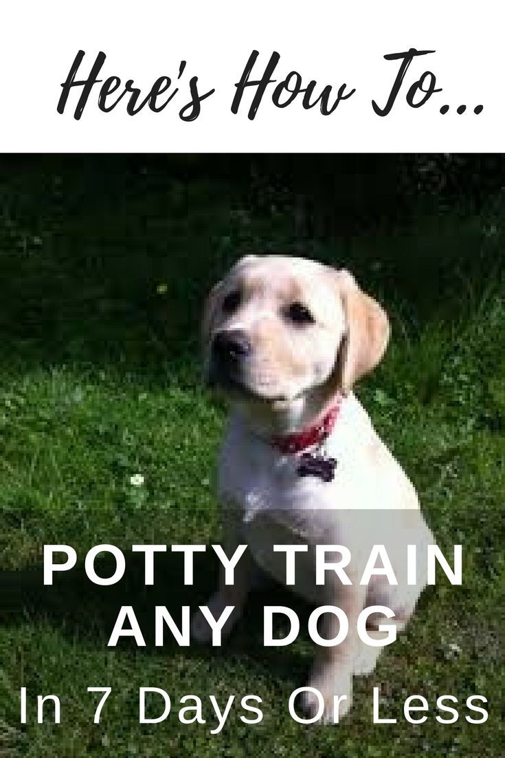 Potty Training A Dog Is Hard Dog Expert Shares 6 Easy Steps To