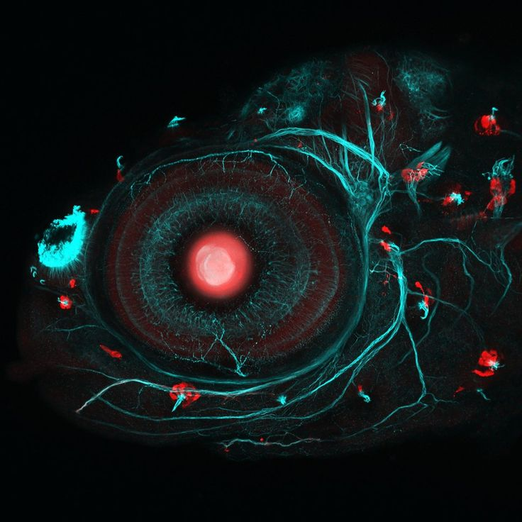 This Award-Winning Selection Of Science Photography Will Blow Your Mind