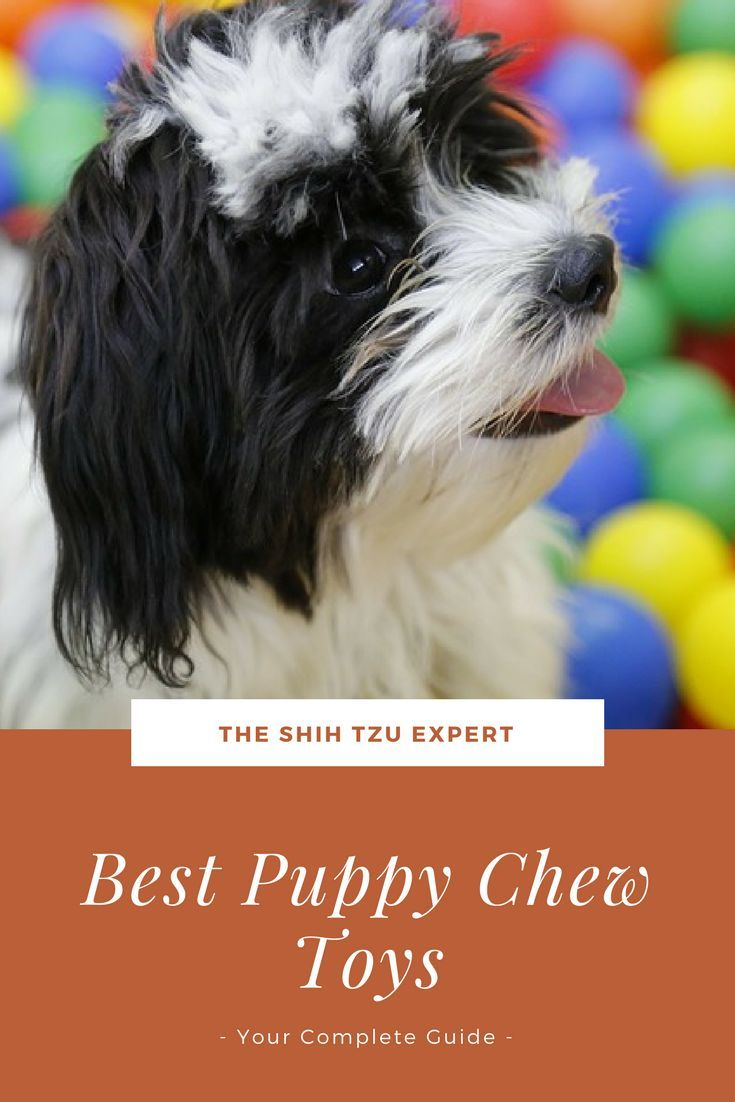 Best Puppy Chew Toys Most Popular And Safe Chew Toys For Teething Puppies Puppy Chew Toys Best Puppies Puppy Chewing
