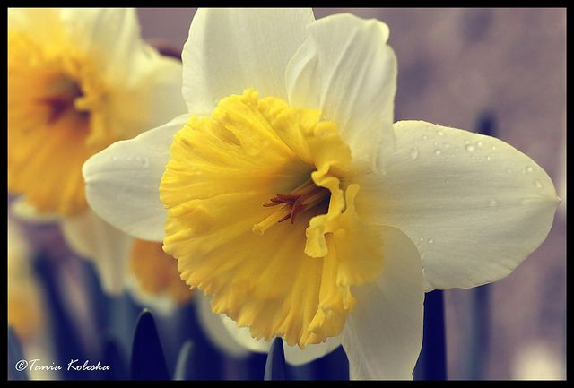 Finaly it's Spring...   Flickr - Photo Sharing!
