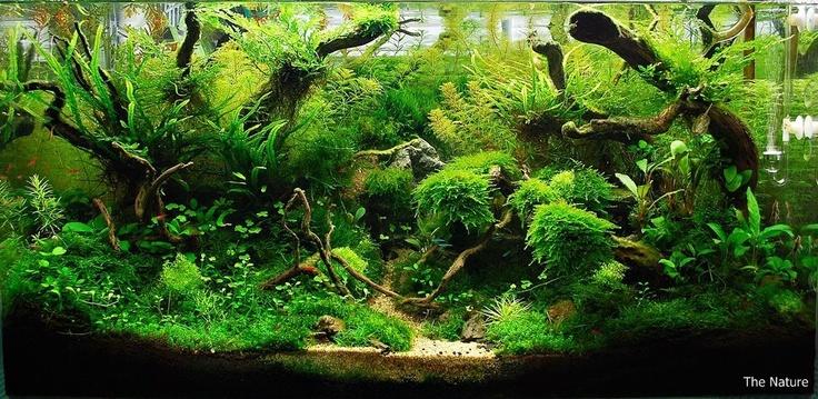 The Jungle Style Planted Tank Aquascape Awards