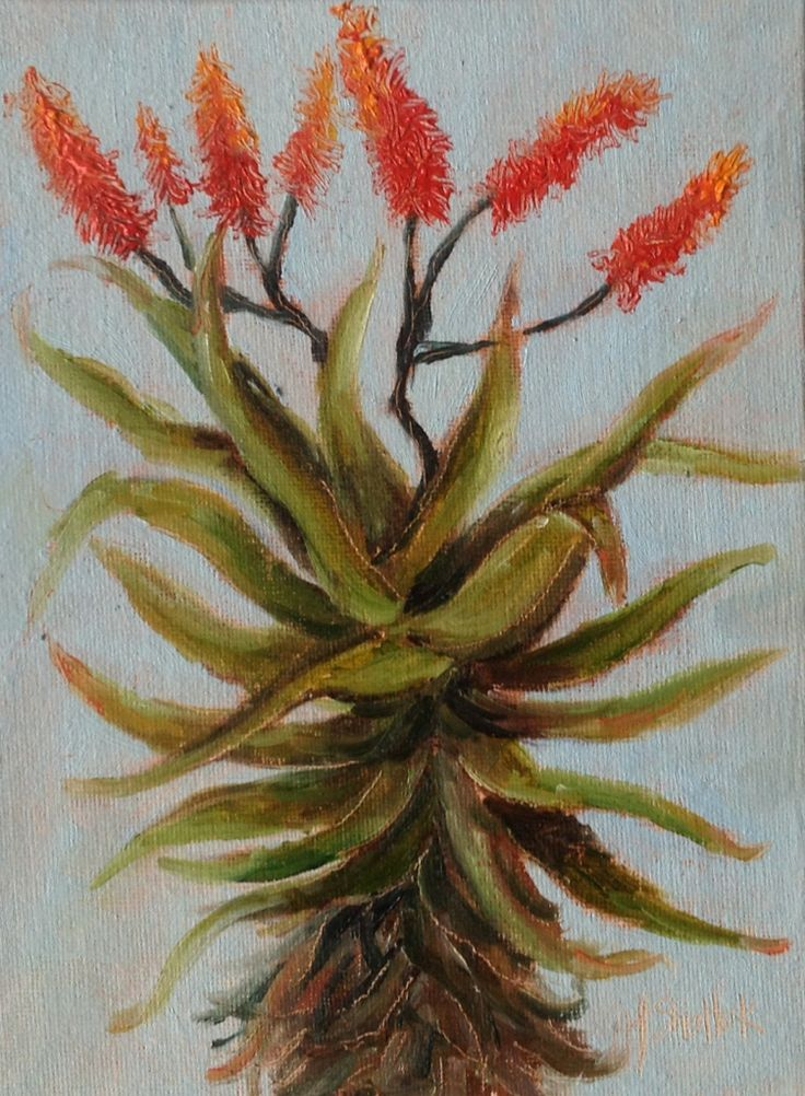 """Garden Aloe #67"" daily painting by Heidi Shedlock"