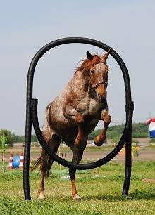 EquiDay is in 3 jaar tijd uitgegroeid tot het grootste Natural Horsemanship evenement van Nederland. Op dit gezellige evenement is Coupony aanwezig met een leuke stand! Hier verloten wij een aantal prijzen.. spannend!