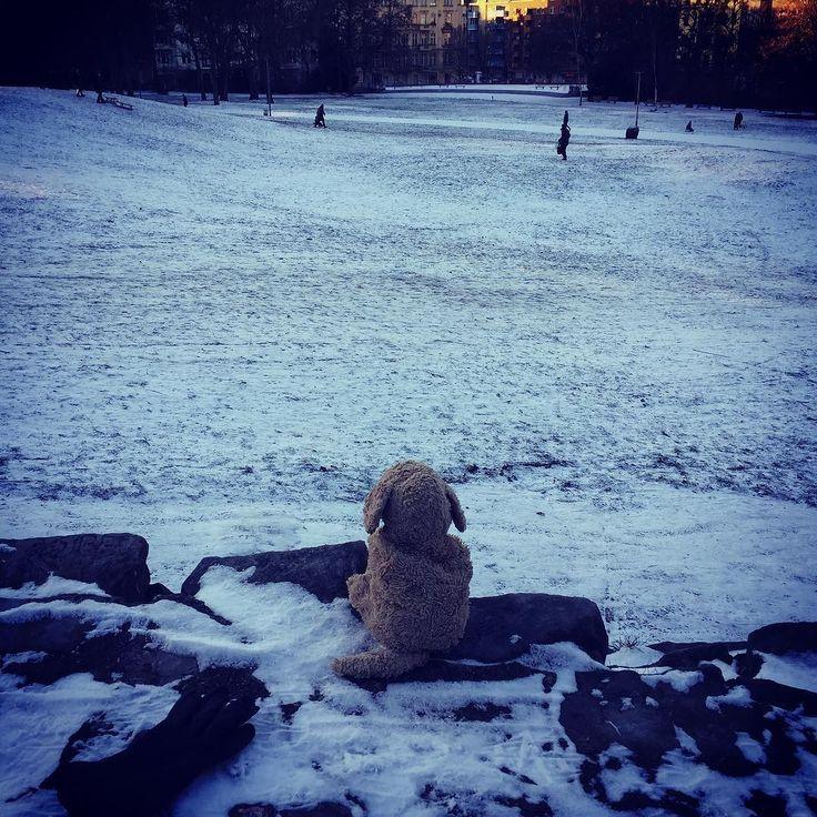 Sometimes you think you near Iceland... But heading to Asia soon. Just need to pack my bag. #gettingdark #gettingcold #ineedmoresun #plushiesofinstagram #plushies #lovelaughlobilat #kuscheltierliebe #hundeliebe #fluffydog #fff #fluffylove #berlinlufe #welpenliebe #viktoriapark #snow