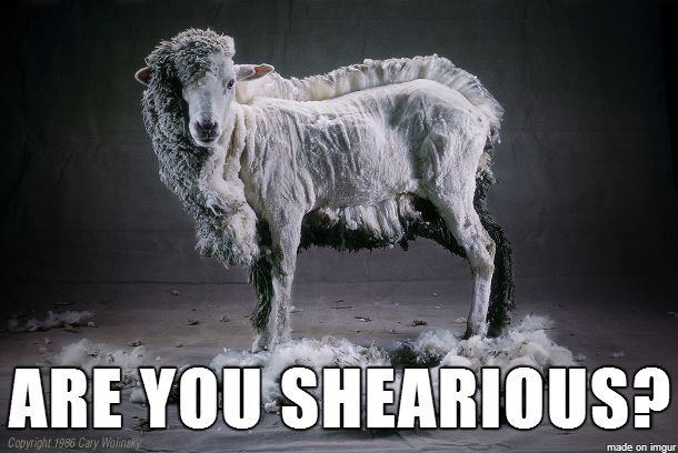 Image result for sheep puns