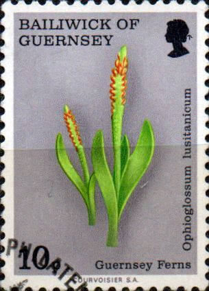 Guernsey 1975 Ferns Least Adder s Tongue SG 125 Fine Used SG 125 Scott 122 Condition Fine Used Only one post charge applied on multipule purchases