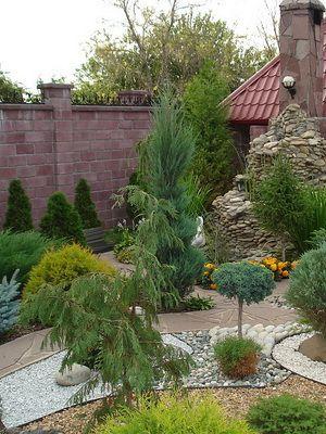 Подбор растений для сада: какие растения посадить в саду, фото деревьев и кустарников для сада