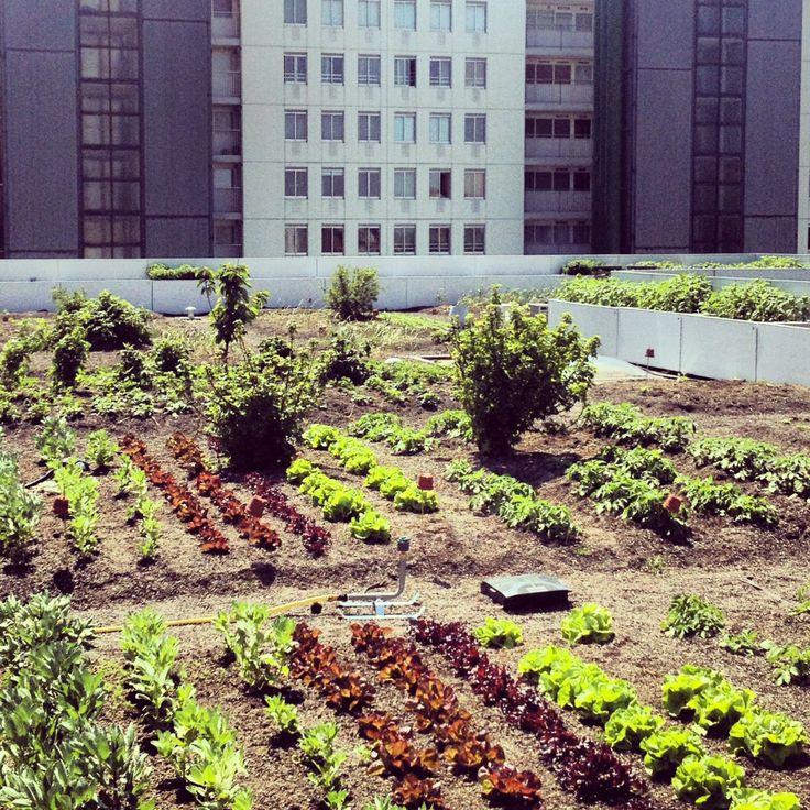 In het Schieblock, voormalig kantoorgebouw en nu 'laboratory for urban development'. Op het dak vind je het Dakpaviljoen. Hier kijk je uit over het eerste oogstbare dak van de Randstand: de Dak Akker. http://magazine.foodinspiration.com/nl/magazine/6958/746072/tour_rotterdam.html