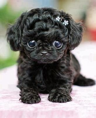Is this not the cutest dog you have ever seen?!  OMG I want it!