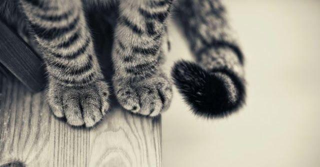 Wajib Tau Cara Mengobati Kaki Kucing Keseleo