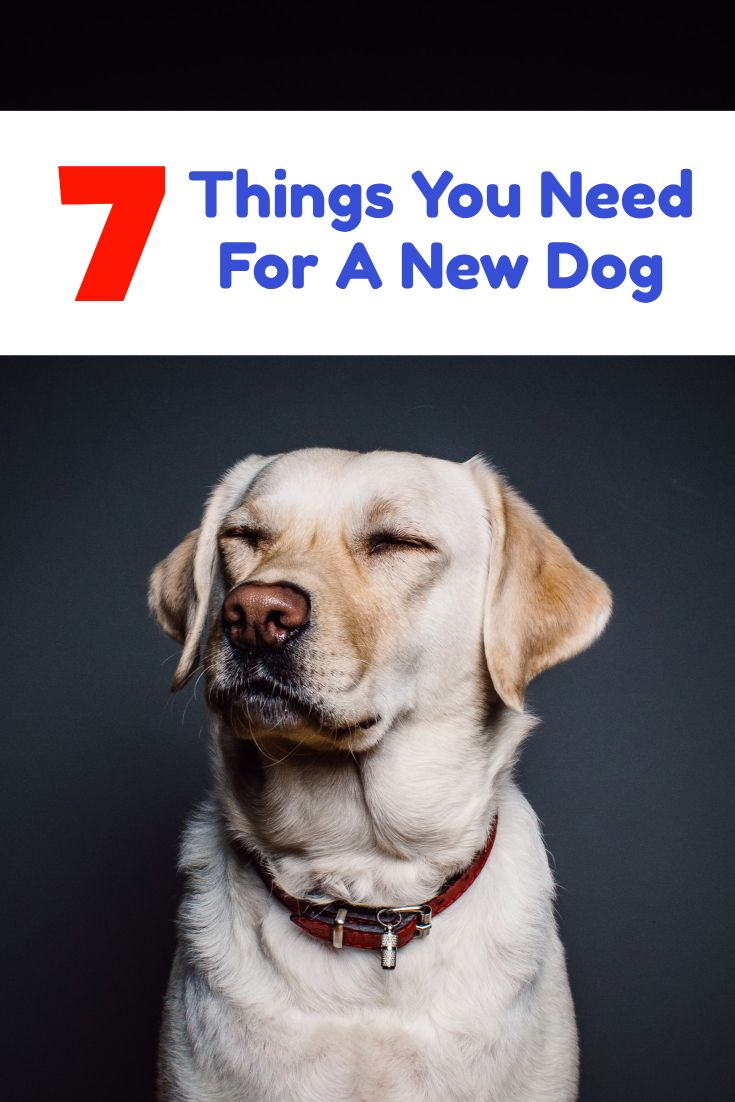 What You Need To Know Before Obedience Training Dog