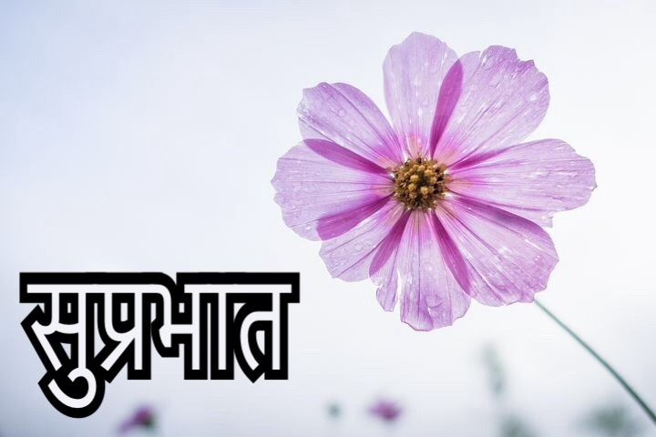 50 Latest Suprabhat Images For Whatsapp In Hindi Suprabhat In Hindi In 2020 Types Of Flowers Flower Names Flower Images