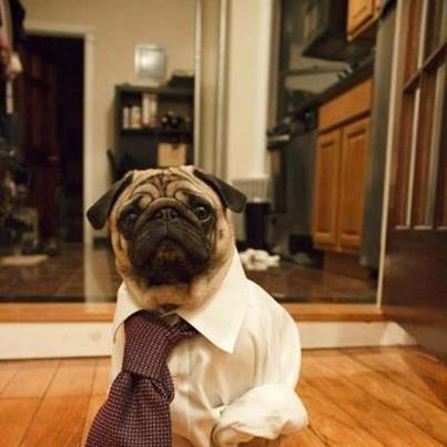 Lucho es lunes hay que ir a trabajar