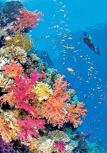 Menjangan Island, Bali (Bali Barat National Park)