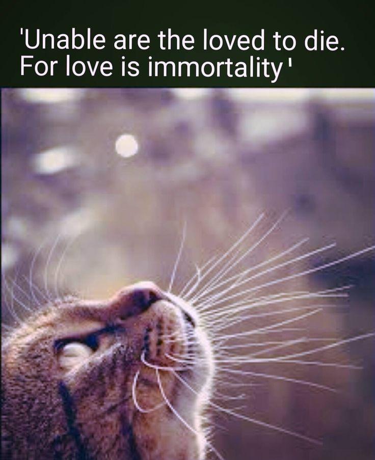 good lovin cat treats