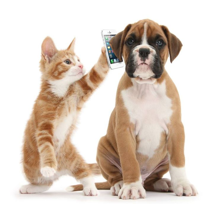 Kittens and Puppies love Woof Gang Bakery so much they're learning how to use phones. #BeeRidge