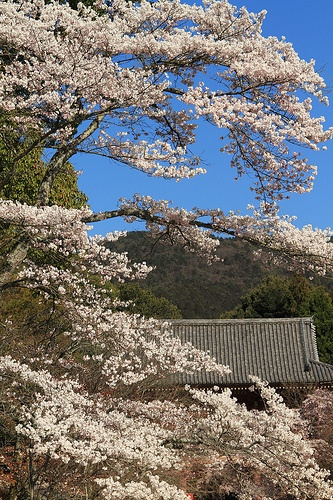 Daigo-temple #japan #kyoto