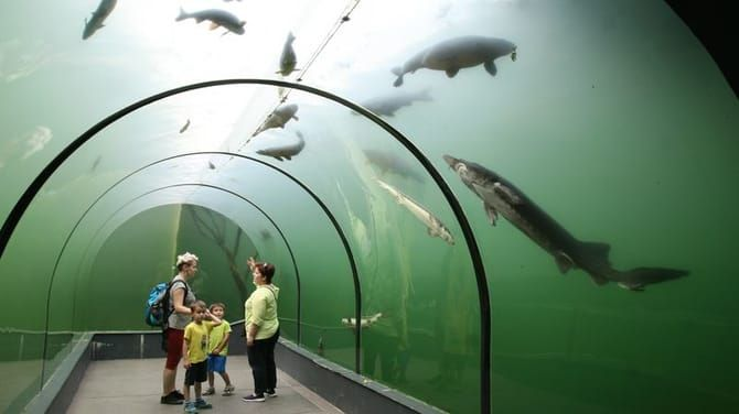 Pohľad zpreskleného tunela do kráľovstva rýb.