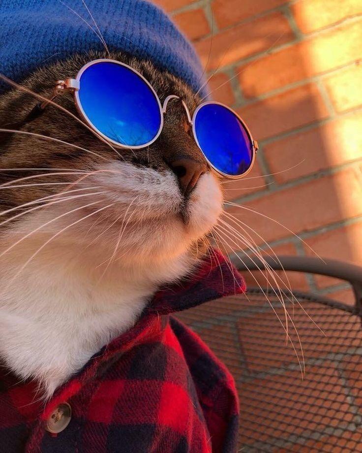 показывает картинки на аву четких котов должен располагаться предмет