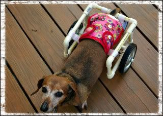 Cat Wheelchair Plans Google Search Wheelchairsdog Care