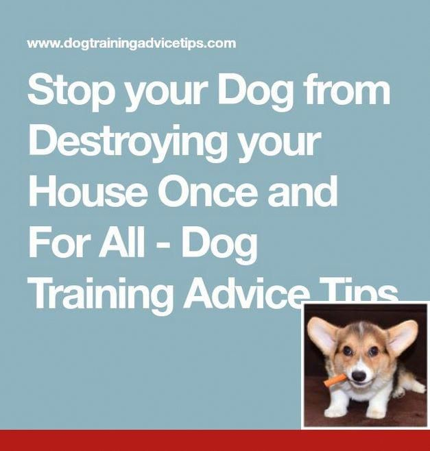 Clicker Training Hund Dogtraining And Dogcare Dog Training