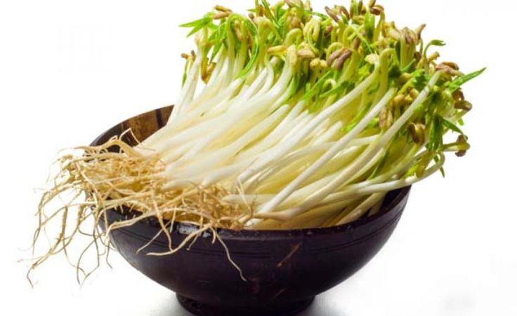 Sprossen selber ziehen -  Gerade in den Wintermonaten hat unser Organismus einen erhöhten Bedarf an abwehrstärkenden Vitaminen und sekundären Pflanzenstoffen. Würzige Keimsprossen sind einfach auf der Fensterbank zu ziehen und decken diesen Bedarf wie kaum ein anderes Gemüse.