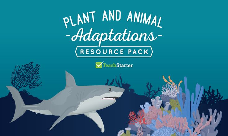 A teaching resource pack of posters, worksheets and activities for teaching animal and plant adaptation and evolution.