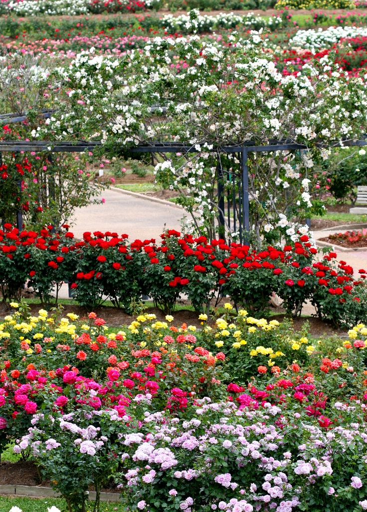 Roses In Garden: 17 Best Images About Ideas To Make A Rose Garden On