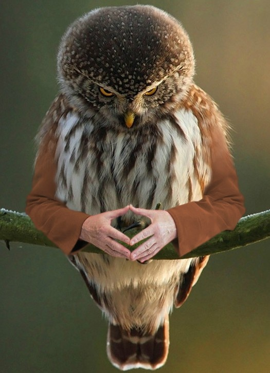 Soon. Manipulated images. Birds with Arms. | Fabulous ...