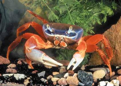 Halloween Moon Crabs