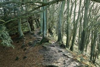 """""""The image shows part of a three-mile section of the great earthwork boundary dyke built along the Anglo-Welsh border by Offa, King of Mercia around the 780s. Offa was the King of the Mercians, a warrior tribe from central England, from 747 to 796 AD. He had seized power during a time of great unrest along the border between Wales and England. He decided to separate two countries."""