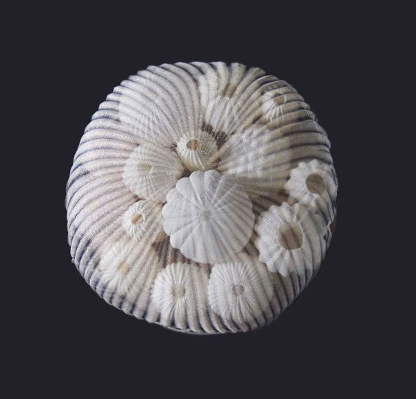 アメリカ、マサチューセッツを拠点に活動する日本人アーティストの楠本真理子さんは、独創的なジュエリー作品を発表し、注目を集めています。・意外な素材でサンゴを表現☆ポリエステル素材を加熱加工して作られたさ...