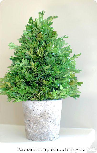 33 Shades of Green: Handmade Holidays: Fresh Boxwood Topiary Tutorial