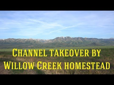 Meet the Willow Creek Homestead family | Channel takeover collaboration