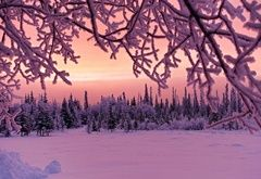 Wallpaper evening, sunset, winter, snow, forest, frost, tree