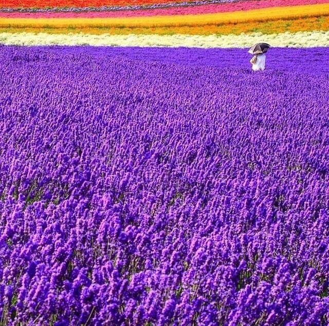 Furano-shi, Hokkaido, Japan @travelandleisure