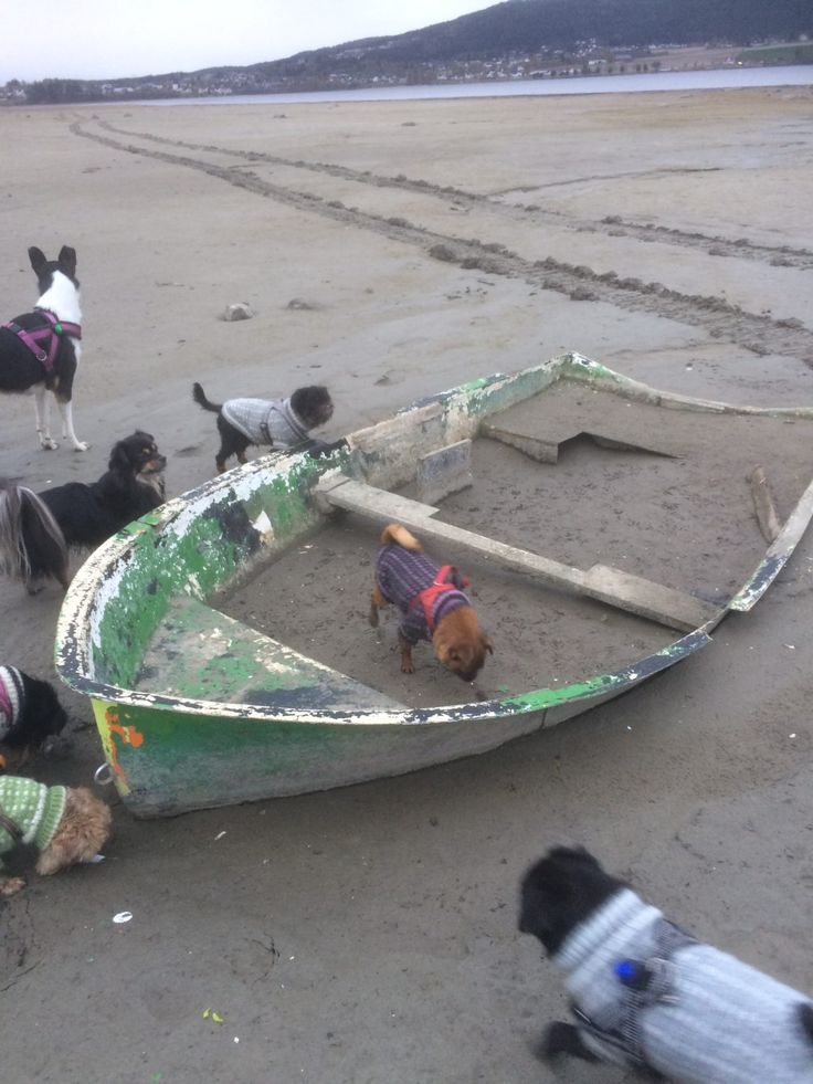 Ro, ro, ro din båt - Row, row, row your boat