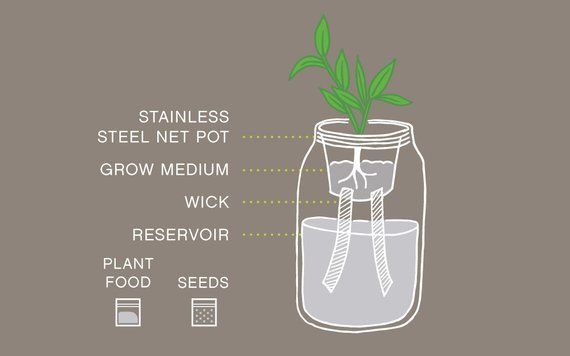 Garden Jar: Self-Watering Herb Kit - Cilantro - Mason jar ideas