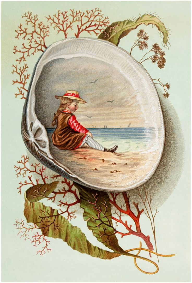 Marvelous Vintage Clam Shell Scene Image! - The Graphics Fairy