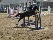 Stunning Jumper Gelding For Lease ON PROPERTY LEASE ONLY: