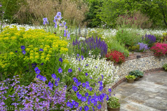 Marianne Majerus Garden Images Garden Images Garden Geraniums