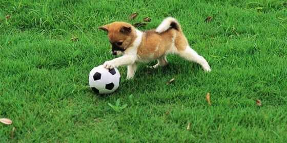 Focizó kutyus