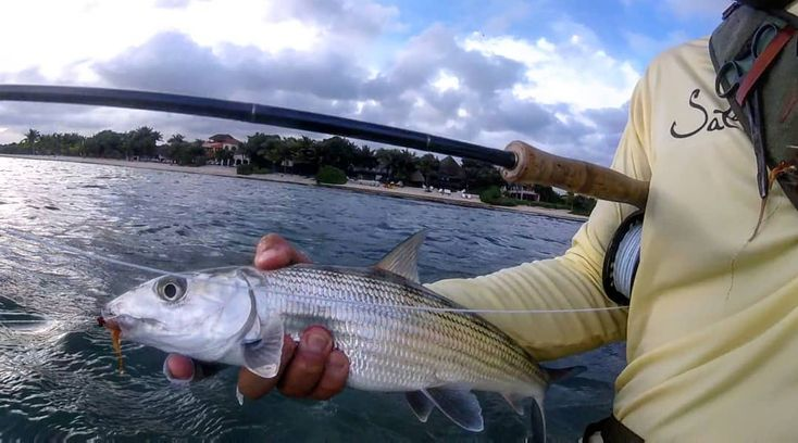 First bonefish of the trip was a big one!  #itonlycountsonfly #flyfishing  #fishing #skinnywaterculture #catchandrelease #flats #fish #gopro #bonefish #flyfishingjunkie #adventures #flyfishingnation #catchandrelease #nature #flyfishingphotography #flylife #getoutandfish #outdoors #sup #supfishing #paddleboard